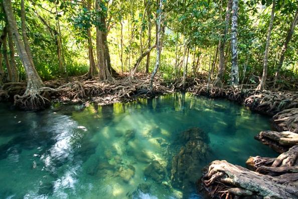 Pa Phru Tha Pom Khlong Song Nam Reserve
